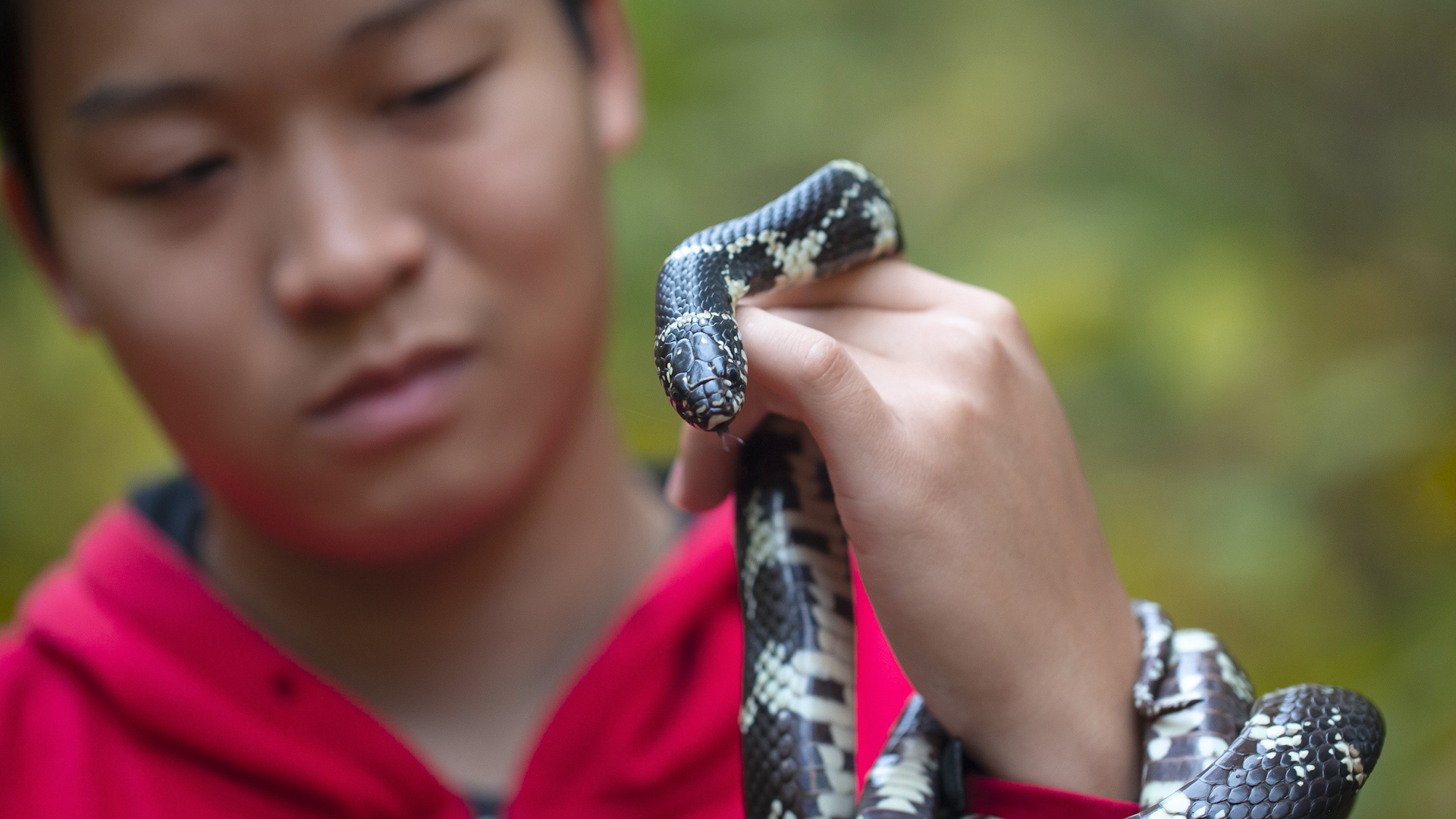 Justin Lee, Herpetologist, holding a small snake